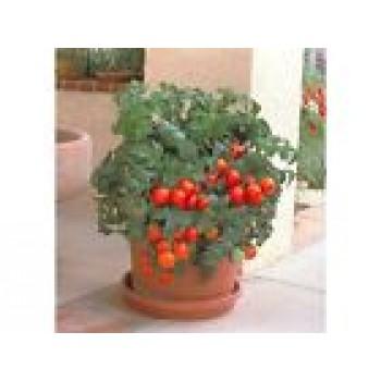 Eco Organic Tomato Vegetable seed Balcony Mirracle
