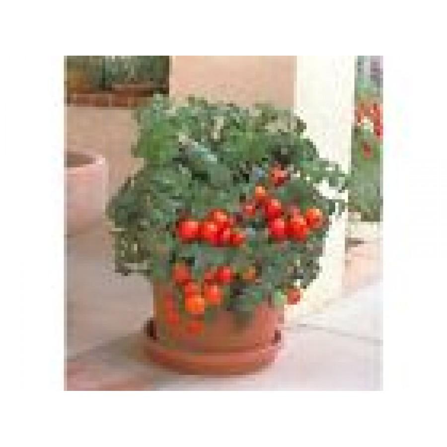 Семена для балкона и комната. - фото отчет - каталог статей .