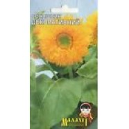Decorative Sunfloer seeds Flowers Seeds from Ukraine