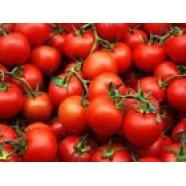 Organic Tomato Vegetable seed Samson from Ukraine average germination