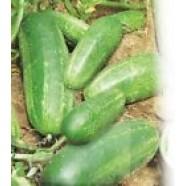 Rare Fresh Seeds Cucumber Kasper -F1 Ukraine Heirloom Vegetable Seeds early