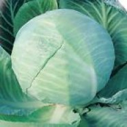 Cabbage seeds Amager Organic Heirloom Vegetable Seeds
