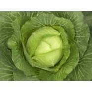 Cabbage seeds Langesvit Bevar Organic Heirloom Vegetable Seeds late