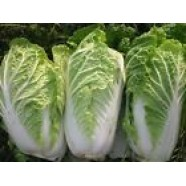 Chinesse Cabbage seeds Mishel Organic Heirloom Vegetable Seeds