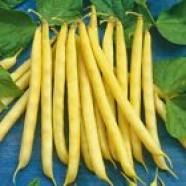 Beans seeds Panter Organic Heirloom Vegetable Seeds from Ukraine