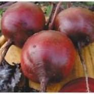 Beetroot Seeds Egipos Organic Heirloom Vegetable Beet Seeds from Ukraine