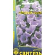 Campanula Medium Blue Flowers Seeds from Ukraine
