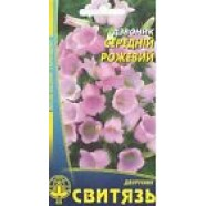 Campanula Medium Rose Flowers Seeds from Ukraine