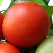 Rare Seeds Tomato Ukraine Heirloom Vegetable Seed early