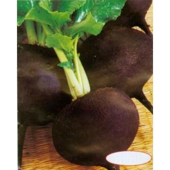 Fresh-Black-Radish-Seeds-Skvirska-Ukraine-Heirloom-Vegetable-Seeds-Huge-pack  Fresh-Black-Radish-Seeds-Skvirska-Ukraine-Heirloom-Vegetable-Seeds-Huge-pack Fresh Black Radish Seeds Skvirska Ukraine Heirloom Vegetable Seeds Huge pack