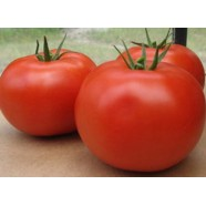 Organic-Tomato-Vegetable-seeds-Sarmat-from-Ukraine-average  Organic-Tomato-Vegetable-seeds-Sarmat-from-Ukraine-average Organic Tomato Vegetable seeds Sarmat from Ukraine average
