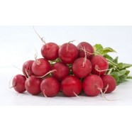 Organic-Fresh-Red-Radish-Seeds-Lada-Ukraine-Heirloom-Vegetable-Seeds  Organic-Fresh-Red-Radish-Seeds-Lada-Ukraine-Heirloom-Vegetable-Seeds Organic Fresh Red Radish Seeds Lada Ukraine Heirloom Vegetable Seeds