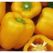 Organic Vegetable Pepper Seeds from Ukraine eco Podstolina sweet pepper seeds