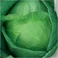 Organic Cabbage seeds Yaroslavna Ukraine Heirloom Vegetable Seeds
