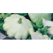 Eco Seeds White Squash - Zucchini Organic Heirloom Vegetable Seed from Ukraine