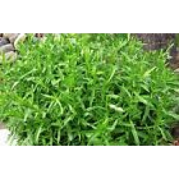 Estragon Seeds Heirloom Organic Herb Seed