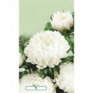 Aster Flower Seeds Vaiser Turm Callistephus Chinesis Paeonien fl pl from Ukraine